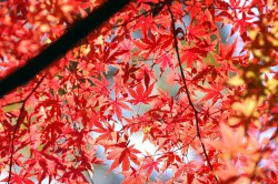 中間平の紅葉