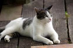 中間平の猫