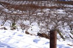 雪の中間平