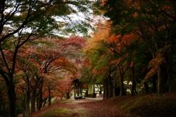 中間平緑地公園の紅葉